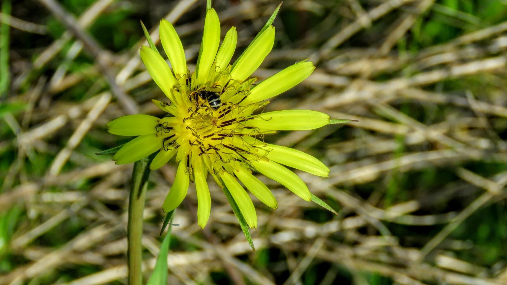 Цветики, птички, маслята и сосновые шишки. Мои припасы на зиму) IMG_6601.jpg