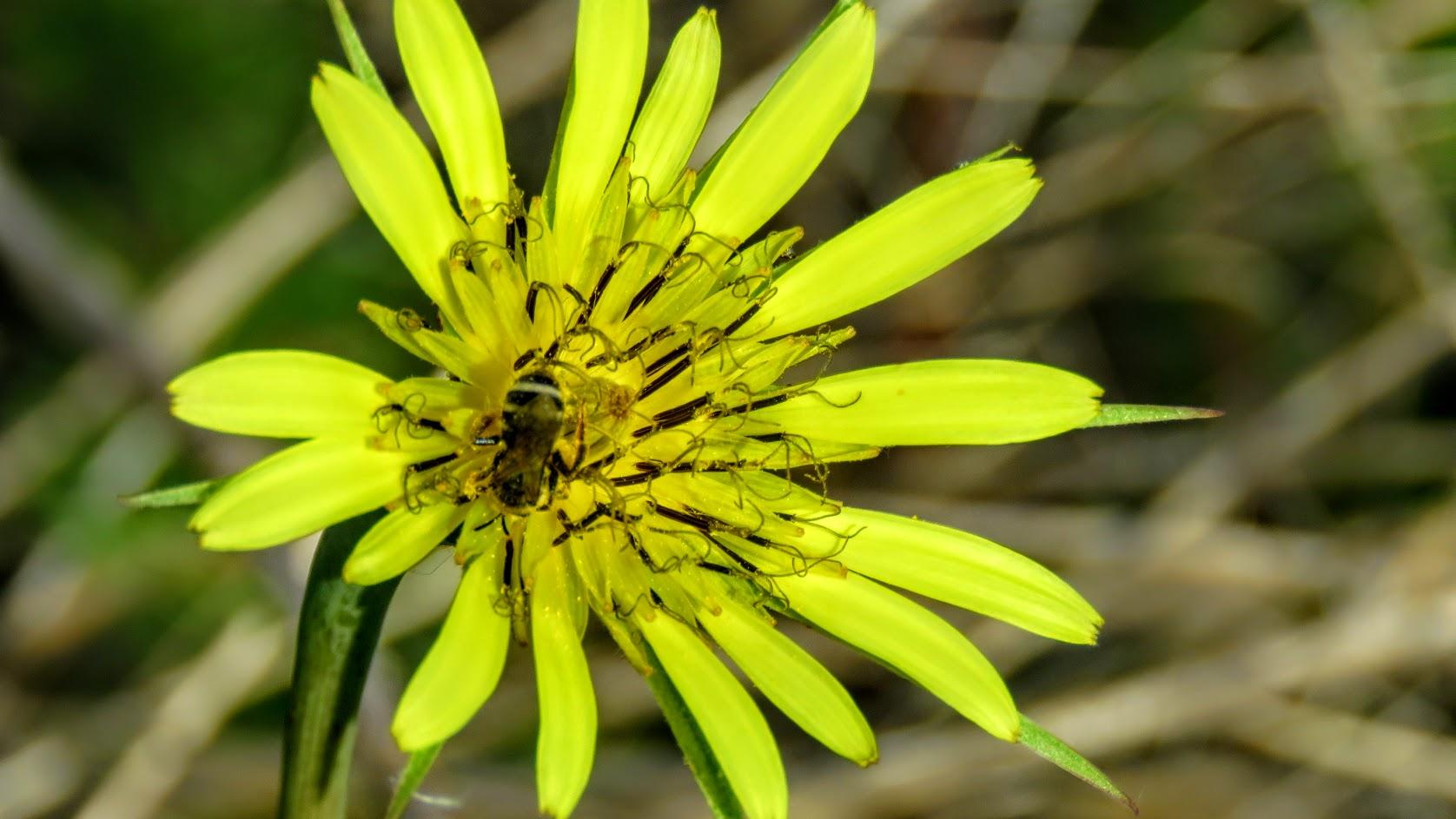 Цветики, птички, маслята и сосновые шишки. Мои припасы на зиму) IMG_6602.jpg