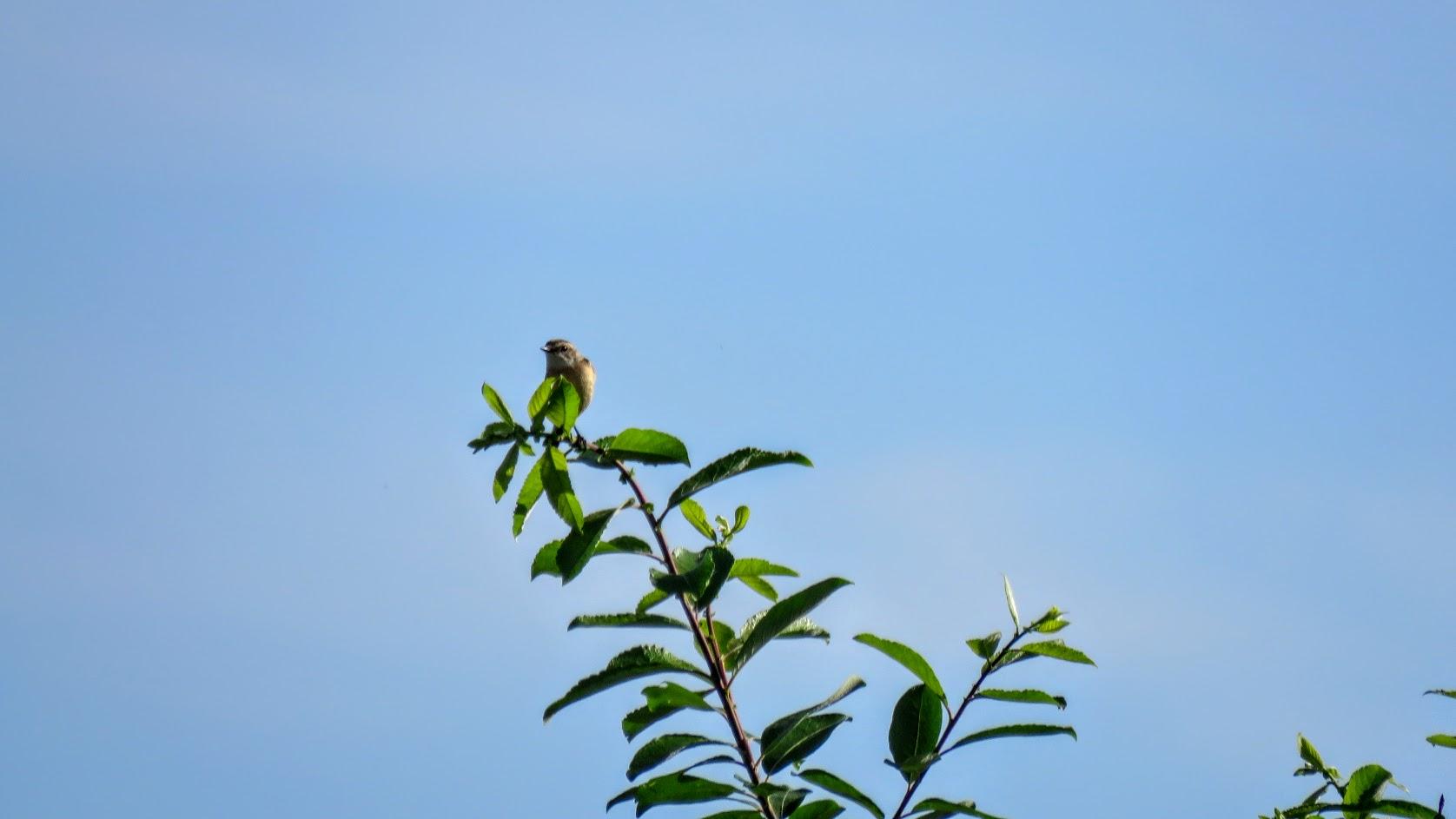 Цветики, птички, маслята и сосновые шишки. Мои припасы на зиму) IMG_6604.jpg