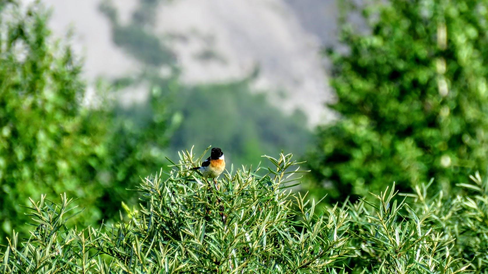 Цветики, птички, маслята и сосновые шишки. Мои припасы на зиму) IMG_6667.jpg