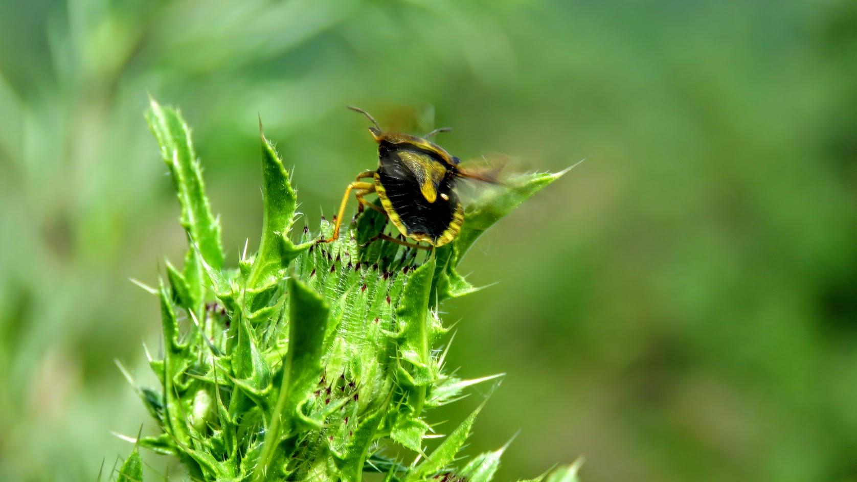 Цветики, птички, маслята и сосновые шишки. Мои припасы на зиму) IMG_6675.jpg
