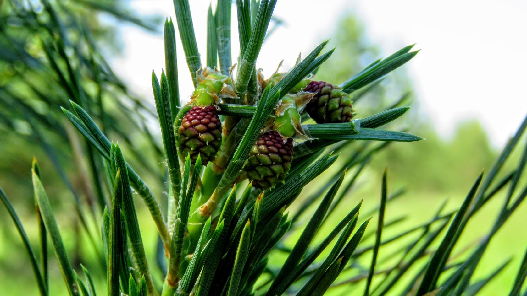 Цветики, птички, маслята и сосновые шишки. Мои припасы на зиму) IMG_6706.jpg