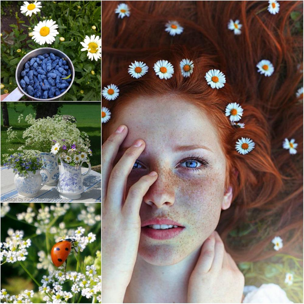 collage20.jpg
