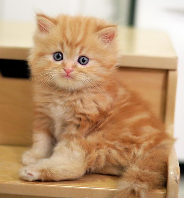 kitten2355 11