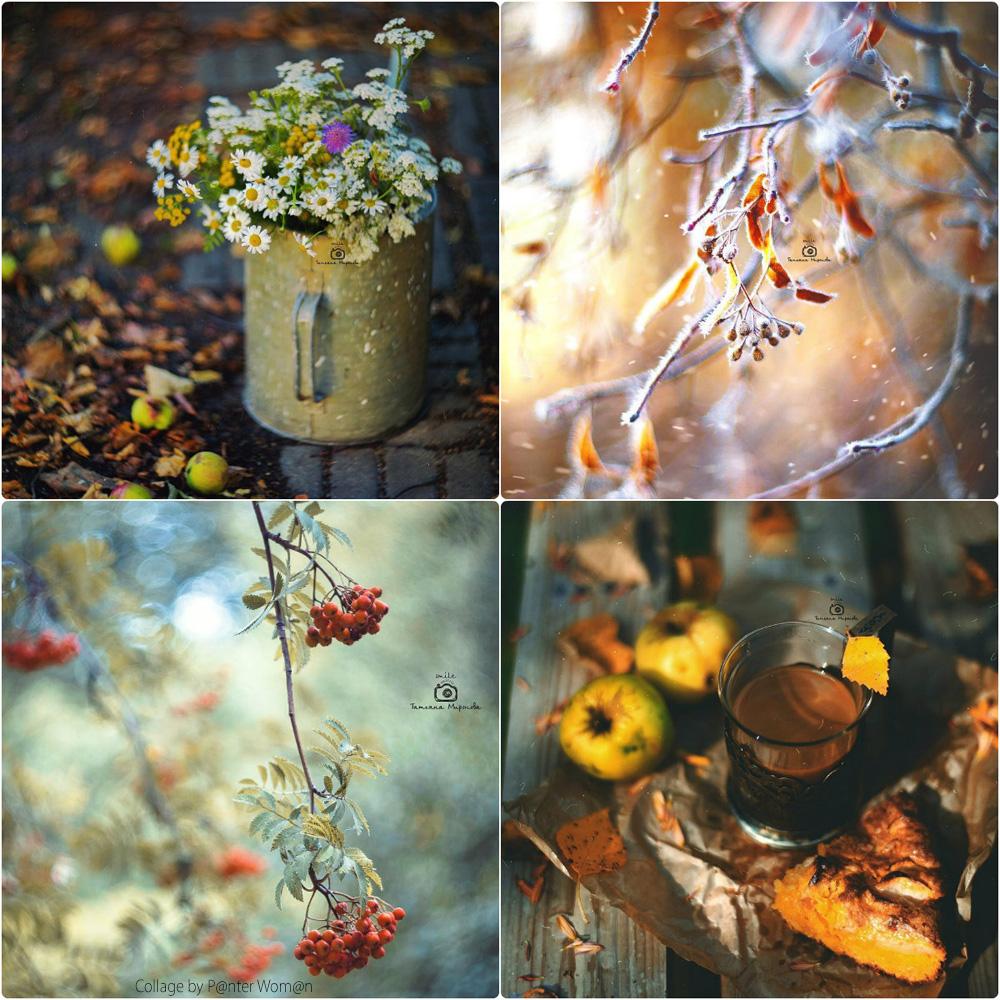 collage16.jpg